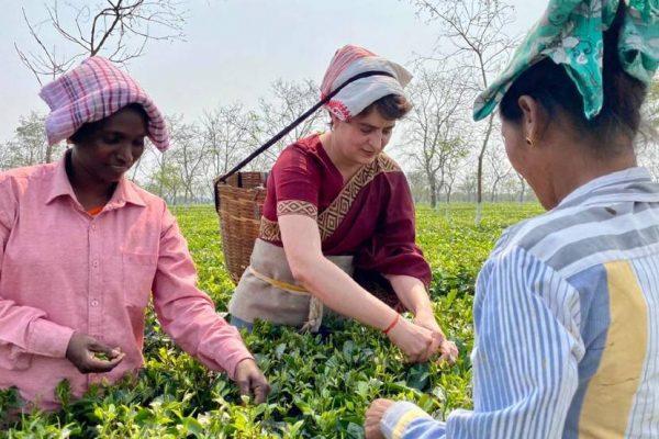 assam-congress-general-secretary-priyanka-gandhi-plucks-tea-leaves-with-workers-at-sadhuru-tea-garden
